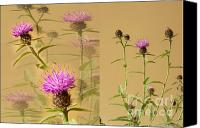 D700 Digital Art Canvas Prints - Cornflower Collage Canvas Print by Donald Davis