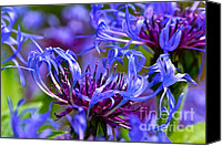 Bluet Canvas Prints - Cornflower Color Canvas Print by Byron Varvarigos