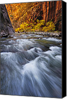 Nature Photo Canvas Prints - Cottonwood Row Canvas Print by Joseph Rossbach
