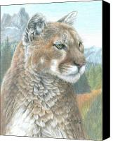 Lion Drawings Canvas Prints - Cougar 2 Canvas Print by Carla Kurt