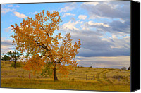 Autumn Photographs Canvas Prints - Country Autumn Landscape Canvas Print by James Bo Insogna