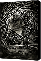 Country Canvas Prints - Country Chicken 13 Canvas Print by Scott Hovind