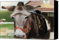 Donkey Pastels Canvas Prints - Country Companion Canvas Print by Barbara Gulotta