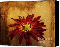 Background Gold Canvas Prints - Country Daisy Canvas Print by Marsha Heiken