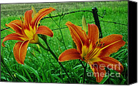 Barbed Wire Fence Canvas Prints - Country Tigerlilies Canvas Print by Marsha Heiken