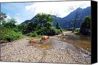 Vietnam Canvas Prints - Cows Crossing River In Vietnam Canvas Print by Thepurpledoor