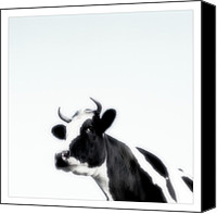 Rural Landscapes Digital Art Canvas Prints - Cows landscape photograph II Canvas Print by Marco Hietberg
