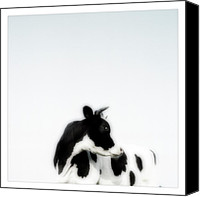 Marco Digital Art Canvas Prints - Cows landscape photograph III Canvas Print by Marco Hietberg