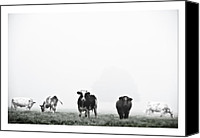 Photographs Digital Art Canvas Prints - Cows landscape photograph V Canvas Print by Marco Hietberg