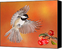 Birds In Flight Canvas Prints - Crabapple Crabapple Before You Fall Who Is The Fairest of Them All Canvas Print by Gerry Sibell