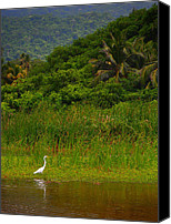 Skip Hunt Canvas Prints - Crane Canvas Print by Skip Hunt