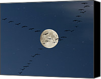 Flock Of Birds Canvas Prints - Cranes Flying To Moon Canvas Print by Sebastian Schneider