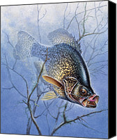 Lake Canvas Prints - Crappie Cover Tangle Canvas Print by JQ Licensing