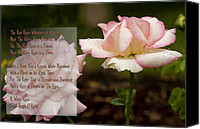Barbara Middleton Canvas Prints - Cream White Rosebud with Poem Canvas Print by Barbara Middleton