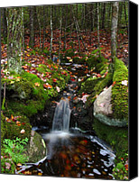 Autumn Canvas Prints - Creek Acadia National Park Canvas Print by Juergen Roth