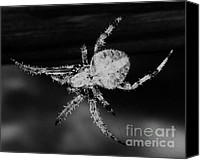 Creepy Digital Art Canvas Prints - Creepy Spider - Black and White - Photography - Digital Art Canvas Print by Rebecca Anne Grant