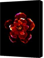 Scanner Canvas Prints - Crimson Bloom Canvas Print by Dolly Mohr