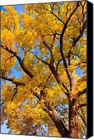 "\""striking Photography\\\"" Canvas Prints - Crisp Autumn Day Canvas Print by James Bo Insogna"