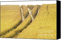 Rural Scenes Canvas Prints - Crossed Lanes on Cornfield Canvas Print by Heiko Koehrer-Wagner