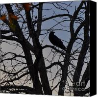 Photos Of Autumn Canvas Prints - Crow in a Tree Canvas Print by Diana Nigon