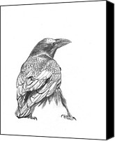 Seattle Drawings Canvas Prints - Crow Canvas Print by Kazumi Whitemoon