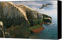 Acadia Canvas Prints - Crusin the Rocks Canvas Print by Brent Ander