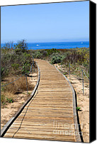 Summer Canvas Prints - Crystal Cove State Park Wooden Walkway Canvas Print by Paul Velgos