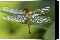 Dragonfly Canvas Prints - Crystal Wings Canvas Print by Evelina Kremsdorf
