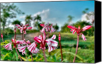 Del Rio Photo Canvas Prints - Cuba. Tararacos wildflower in Pinar del Rio Canvas Print by Juan Carlos Ferro Duque