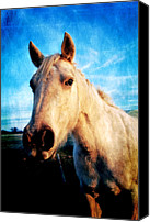 Horse Photographs Canvas Prints - Curious Horse Canvas Print by Toni Hopper