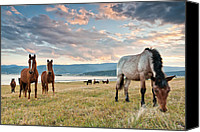 Dam Canvas Prints - Curious Horses Canvas Print by Evgeni Dinev