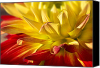 Mariola Szeliga Canvas Prints - Curly Petals Canvas Print by Mariola Szeliga