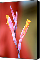 Canna Canvas Prints - Cusp of Emergence Canvas Print by Leigh Meredith