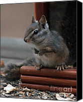 Kenny Canvas Prints - Cute Chipmunk Canvas Print by Kenny Bosak