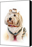Cowboy Hat Canvas Prints - Cute dog in Halloween cowboy costume Canvas Print by Elena Elisseeva