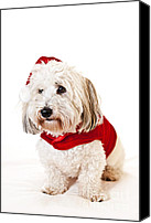 Santa Claus Canvas Prints - Cute dog in Santa outfit Canvas Print by Elena Elisseeva