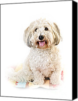 Puppies Canvas Prints - Cute dog portrait Canvas Print by Elena Elisseeva