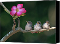 Pink Flower Branch Canvas Prints - Cute Small Birds Canvas Print by Photowork by Sijanto