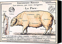 Antique Drawings Canvas Prints - Cuts of Pork Canvas Print by French School