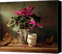 Israel Canvas Prints - Cyclomen Flower Pot And Cup With Strips Canvas Print by Copyright Anna Nemoy(Xaomena)