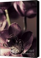 Violet Prints Photo Canvas Prints - Cymbidium Orchid Canvas Print by Jayne Logan Intveld