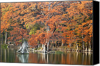 Wimberley Canvas Prints - Cypress Colors Canvas Print by Robert Anschutz