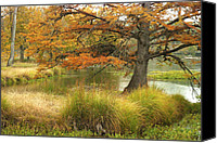 Wimberley Canvas Prints - Cypress Island Canvas Print by Robert Anschutz