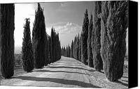 Tuscany Canvas Prints - Cypress Trees Canvas Print by Joana Kruse
