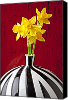 Bold Canvas Prints - Daffodils Canvas Print by Garry Gay