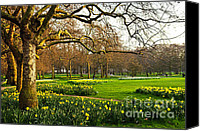 Flower Blooming Canvas Prints - Daffodils in St. Jamess Park Canvas Print by Elena Elisseeva