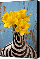Vases Canvas Prints - Daffodils in Wide Striped Vase Canvas Print by Garry Gay