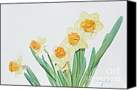 Kim Bird Canvas Prints - Daffodils Canvas Print by Kim Bird