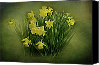 Daffodil Flowers Digital Art Canvas Prints - Daffodils Canvas Print by Sandy Keeton