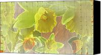 Daffodil Flowers Digital Art Canvas Prints - Daffy Daffodils Canvas Print by Debra     Vatalaro